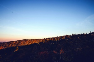 Foresta, montagna, cielo, paesaggio
