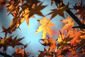 listí, podzim, strom, rostlin, větve