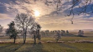Soleil, ciel, arbre, herbe, paysage, nature