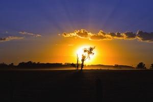sun, tree, cloud, sky, landscape, beam light