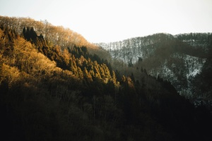 mountain, snow, winter, forest, cold, daylight