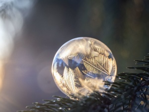 sphere, fir, reflection, transparency, winter, christmas