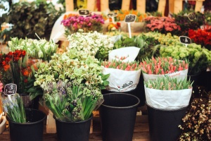flowerpot, flower, supermarket, colorful, plant