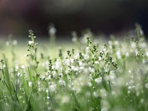 Plante, fleur, prairie, feuille herbe