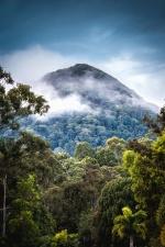 fog, sky, mountain, forest, treetop, nature, landscape