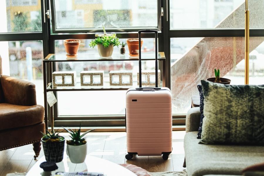 Valise, pot à fleurs, plante, table, voyage, vacances, touristes