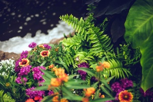 flower, petals, garden, plant, colorful