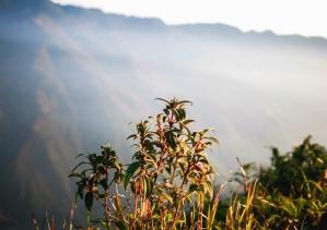 plant, stem, leaf, mountain, fog