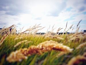 felt, eng, græs, plante, sky, solrig dag