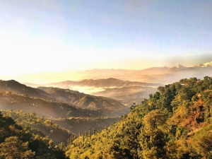 mountain, forest, tree, fog, landscape