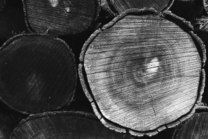 trunk, ring, bark, black and white