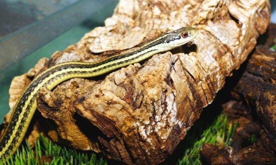 snake, reptile, tree, grass, animal