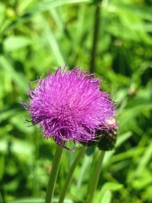flower, petal, stem, plant, bud