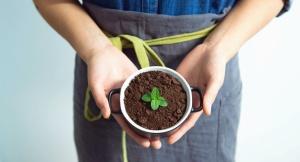 Planta, taza, suelo, mano, hoja