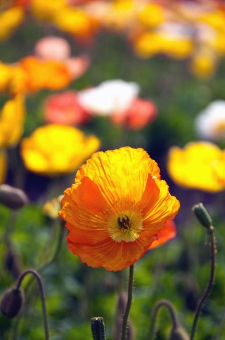 Imagine Gratuită Flori Petale Colorate Plante Tulpină Bud