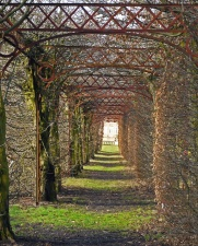 passage, arch, architecture, plant, grass, leaf