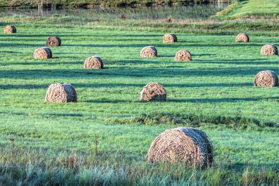 ζωοτροφών, σανό, κτηνοτροφικών, πεδίο, αγρόκτημα, άχυρο, αγροτικές, συγκομιδή, σιτάρι, γεωργία, τοπίο, καλλιέργεια