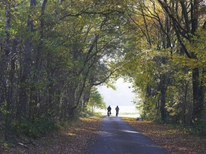 road, landscape, forest, tree, people, bicycle, leaf