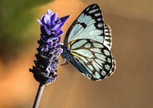 blue, insect, flower, plant, colorful, garden, butterfly
