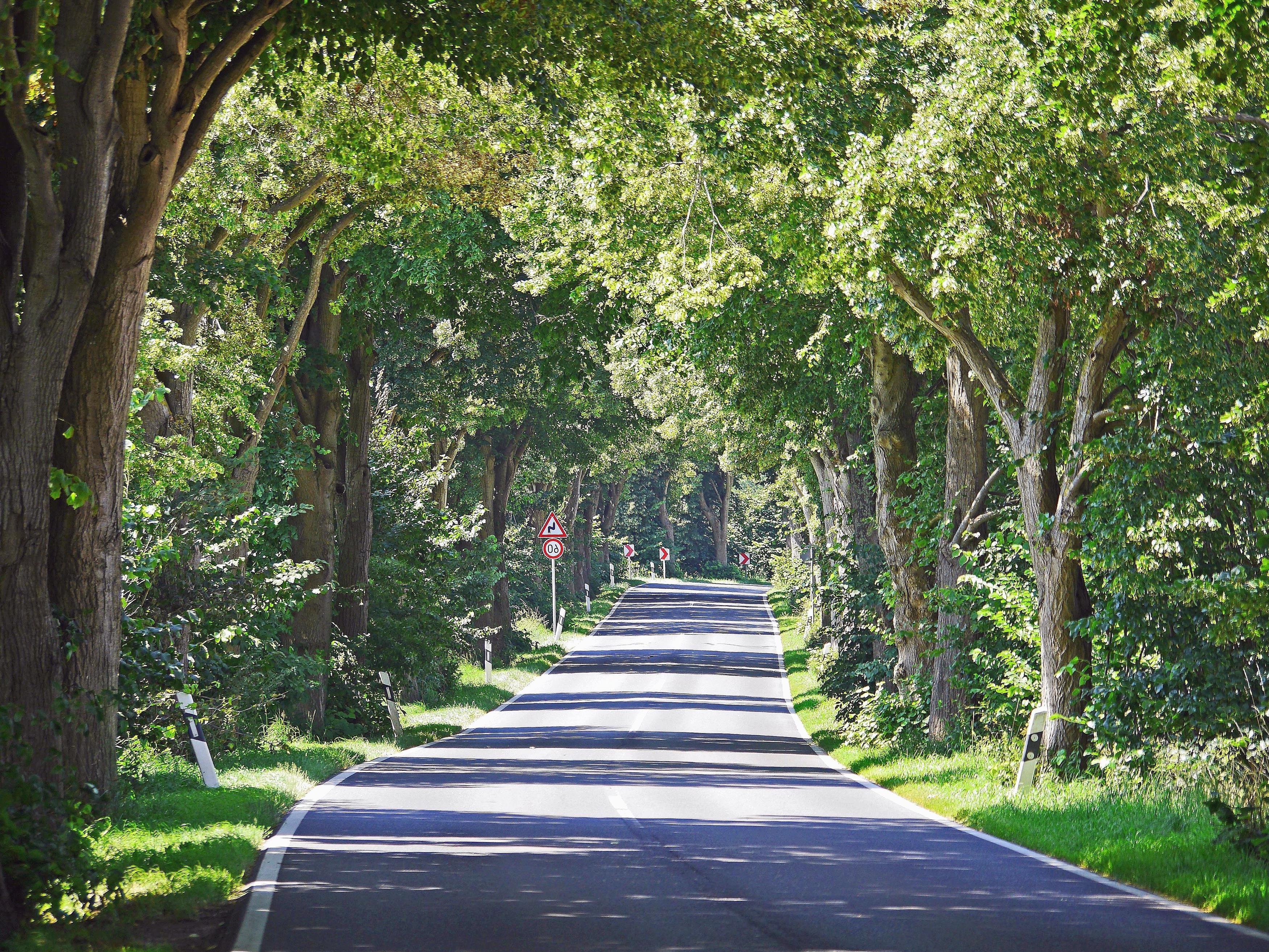 route paysage herbe arbre ciel parc fort t - Arbre Ciel
