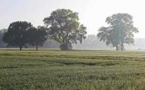 Campo, tierra, paisaje, hierba, cielo, pradera, rural, agricultura, árbol