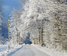 snow, ice, winter, cold, weather, crystal, landscape, road, forest