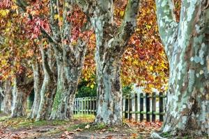park, autumn, forest, tree, foliage, fence