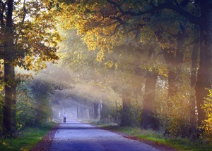 road, tree, forest, sky, grass, park, cloud, road, man