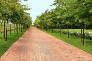 Strada, erba, albero, nube, campo, strada, fiore, pianta