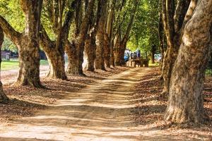 Baum, Wald, Park, Gras, Straße