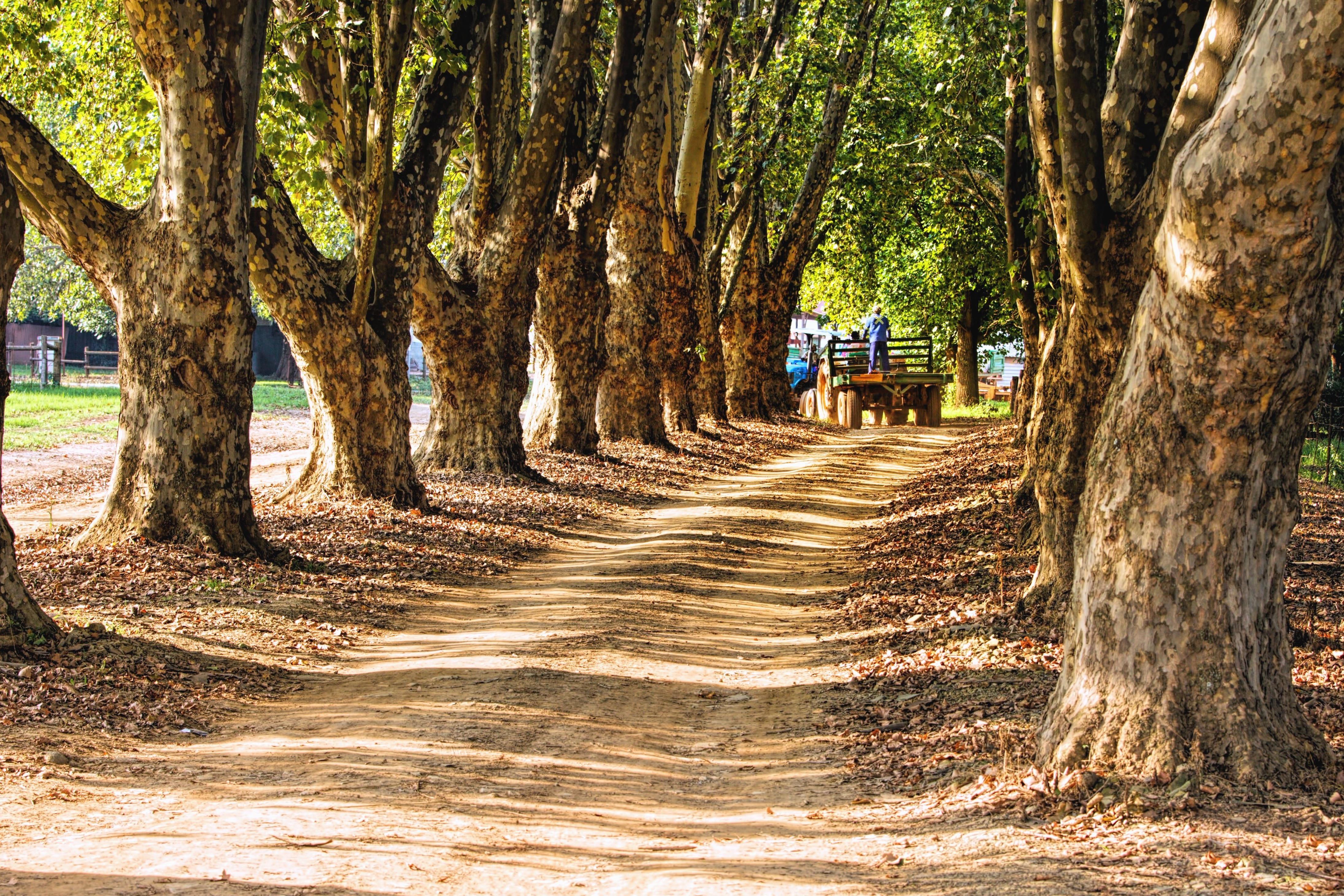 Image libre: Arbre, forêt, parc, herbe, route