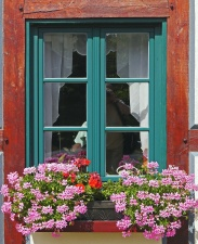house, window, architecture, wall, flower pot
