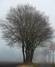 cold, weather, forest, tree, autumn, road, fog