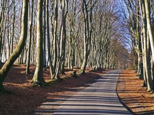 road, asphalt, wood, park, forest, leaf
