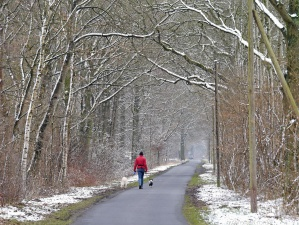 snow, forest, travel, winter, person, dog, animal, road, cold, park