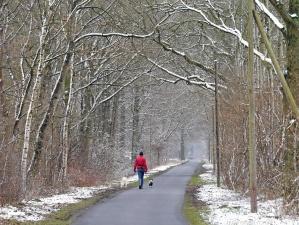 Schnee, wald, reise, winter, person, hund, tier, straße, kalt, park