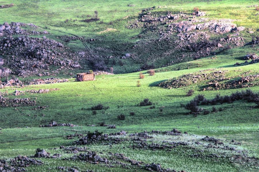land, landscape, grass, field, hill