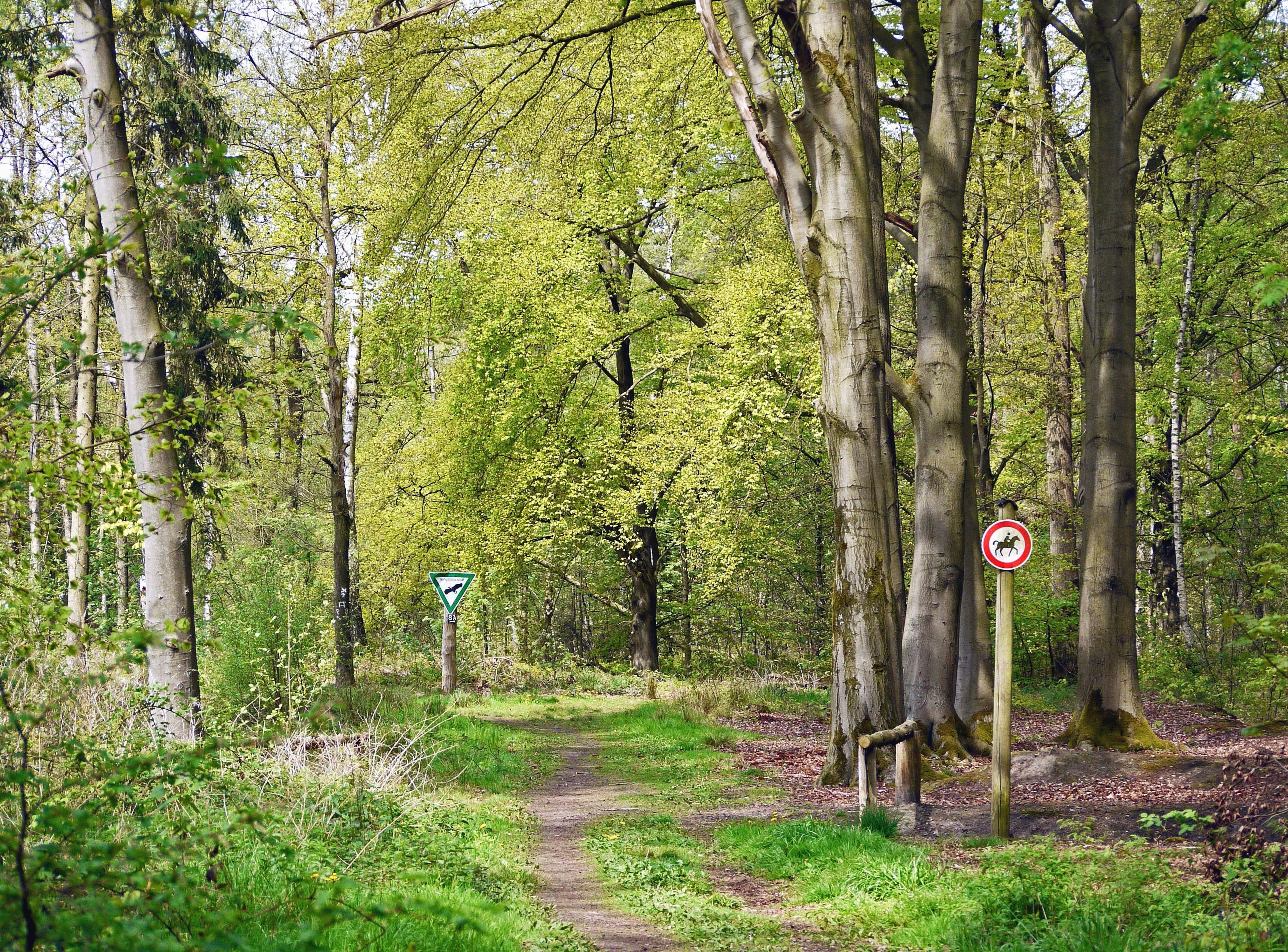 Très Image libre: Arbre, forêt, arbres, herbe, parc, été, plante, ciel ZA77