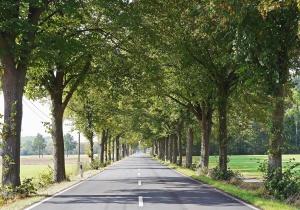 Baum, Wald, Straße, Himmel, Gras, Laub, Sommer, Asphalt, Feld