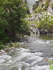 forest, river, water, mountain, stream, tree, rocks