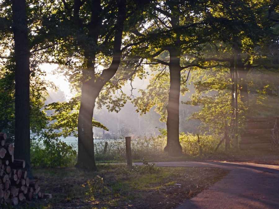 træ, skov, træer, græs, park, sommer, plante, sky