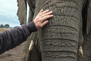 слон, ръка, Африка, животните