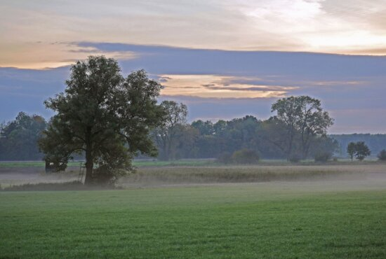 landscape, land, sky, grass, field, cloud, tree