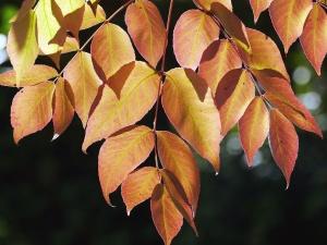 葉枝、植物、木、自然