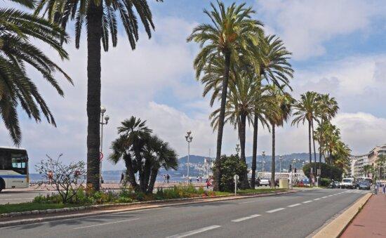 palm tree, asphalt, road, coconut, travel, tropical