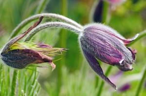 flower, plant, leaf, blossom, herb