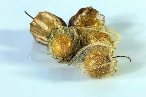 grain, plant, seed, kernel