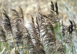 Plante, tige, feuille, champ, herbe, été, croissance