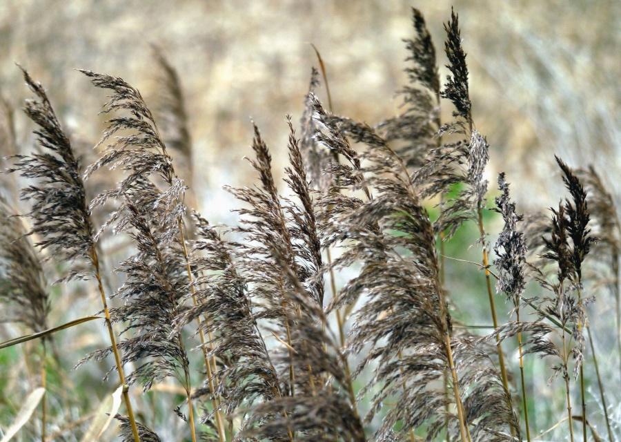 plant, stem, leaf, field, grass, summer, growth