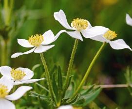 flower, plant, blossom, garden, petal, bloom, flora, leaf, herb